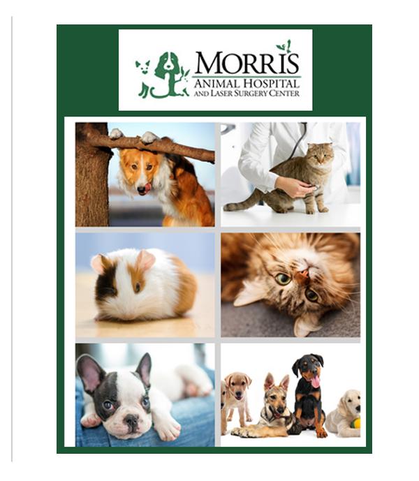 Morris Animal Hospital